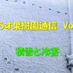 せらす果樹園通信 Vol.26 積雪と冷害