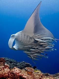 6 Jenis Ikan Hiu Paling Mematikan di Dunia