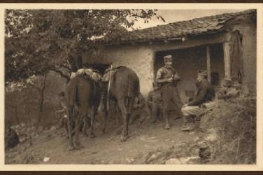 Српска коњица 1913