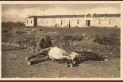 Српски војник кида месо са леша угинулог коња