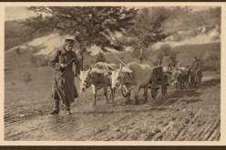 Транспорт муниције 1915
