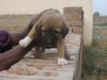 girl-puppy1