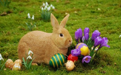30/3/18 – Easter Message – For the Animals, Every Day is a ...