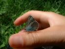 и лептири су опуштени