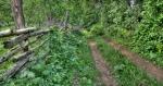 Шумским путем