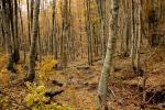 Из ове шуме избићемо на пространства са клекама