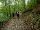Шумски пут води ка Станојевом потоку