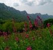 Мммм, шта рећи, једно од најлепших планинарских кутака у Србији...