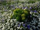 букетић ивањског цвећа у јастуцима осталих