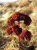 Кад јесен расцвета и оно што је свенуло