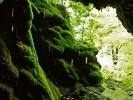 У пролеће је увек набујао и пресвучен живим зеленим нијансама маховине
