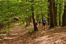 Прен падура (кроз шуму)