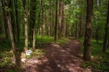 шумска стаза ка Ђавољем језеру