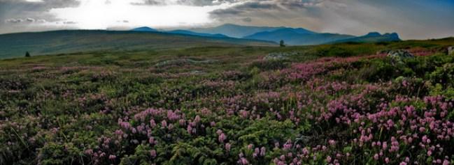 цветни Копренски плато и поглед на Три Чуке