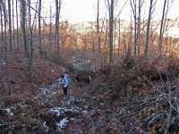 Кроз шуму