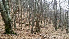Предивна шума за ход