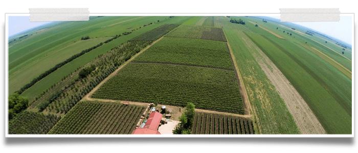 Winery Vindulo, Temerin
