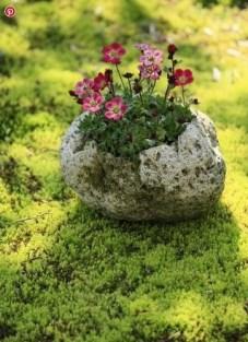 Aranjament floral - bila cu lori