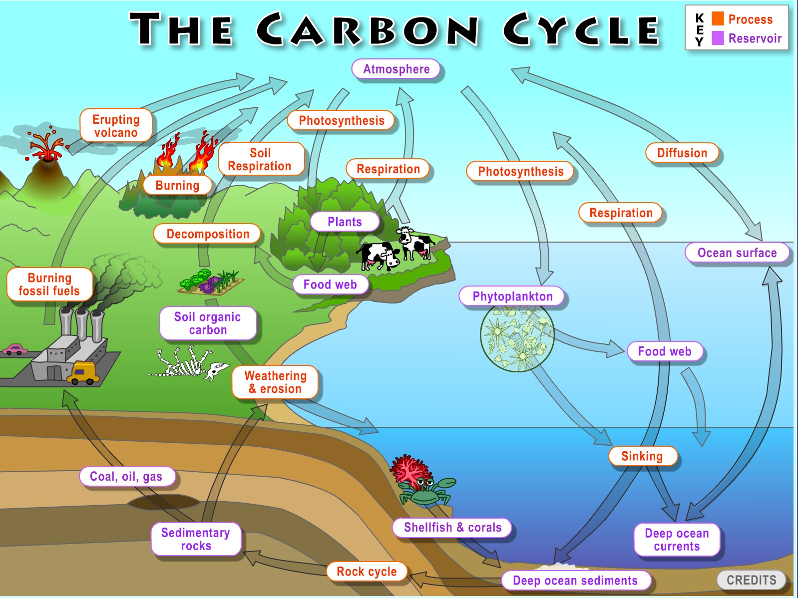 hight resolution of carbon cycle diagram blank carbon cycle diagram worksheet carbon cycle diagram