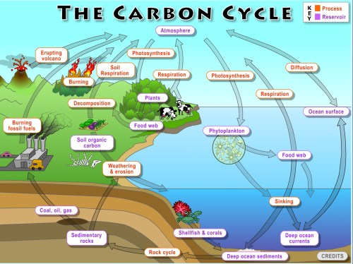 small resolution of carbon cycle diagram blank carbon cycle diagram worksheet carbon cycle diagram