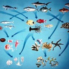 Kelp Forest Food Web Diagram Dodge Trailer Wiring Ocean Pictures
