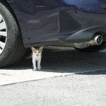 猫よけ対策車