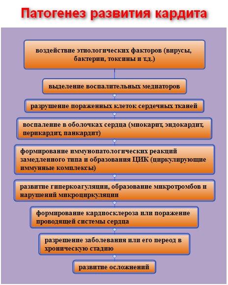 патогенез развития кардита