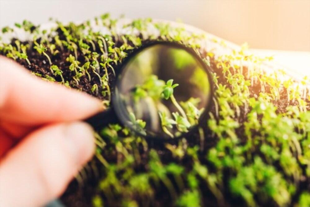 отглеждане на микрорастения