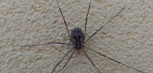 La perfezione fobica del ragno
