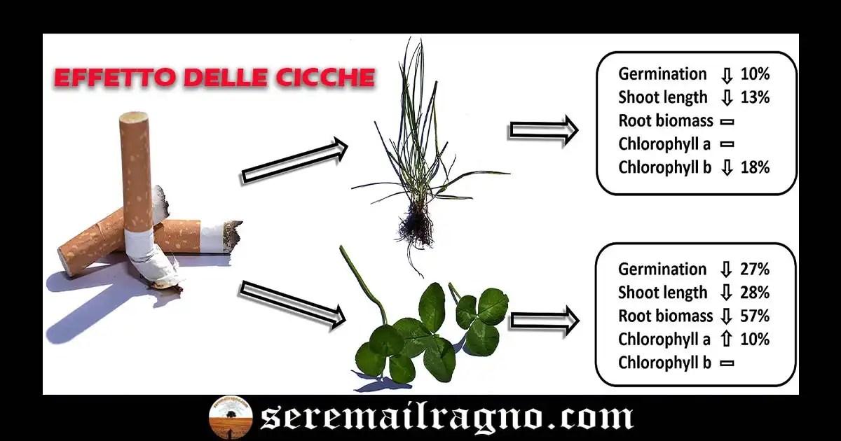 I mozziconi di sigaretta alterano la crescita delle piante