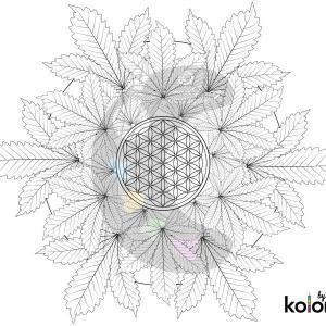1-free-mandala-coloring-page-01