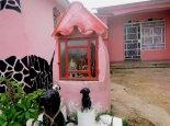Viñales, San Lázaro y sus perros 2014