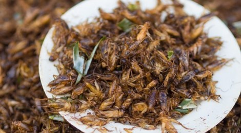 comer-insectos