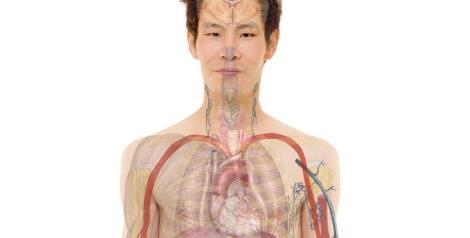 6 curiosidades sorprendentes sobre el cuerpo humano