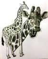 Giraffes in Ink
