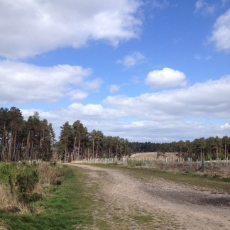 Taking a break from uphill riding and admiring the view of Swinley Forest.