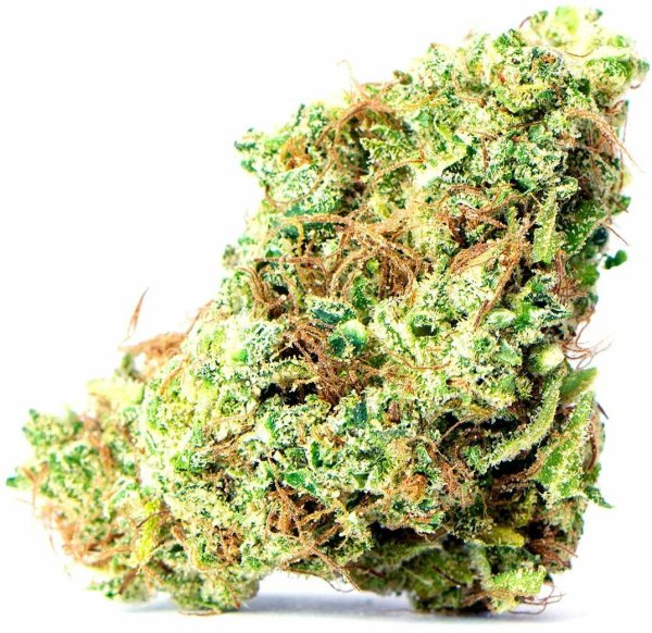 Godzilla Glue flowers Serene Farms Online Dispensary
