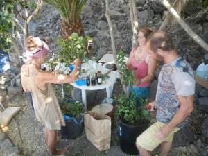 Serene Light Gardens, Permaculture Community, Community Tenerife, Tenerife