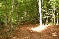 New trails at SVR