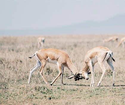 why you should visit Serengeti in your lifetime