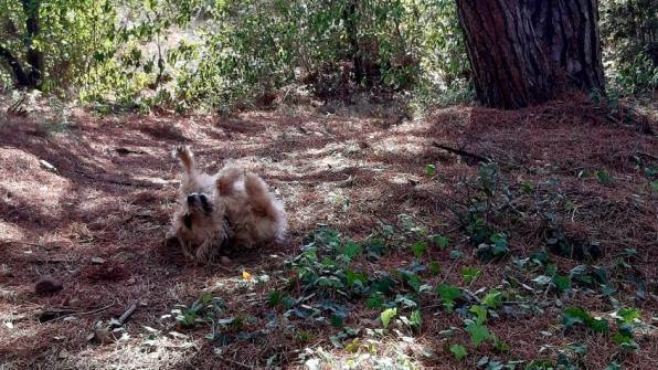 Serenity Animal Pet Sitter Aude 11