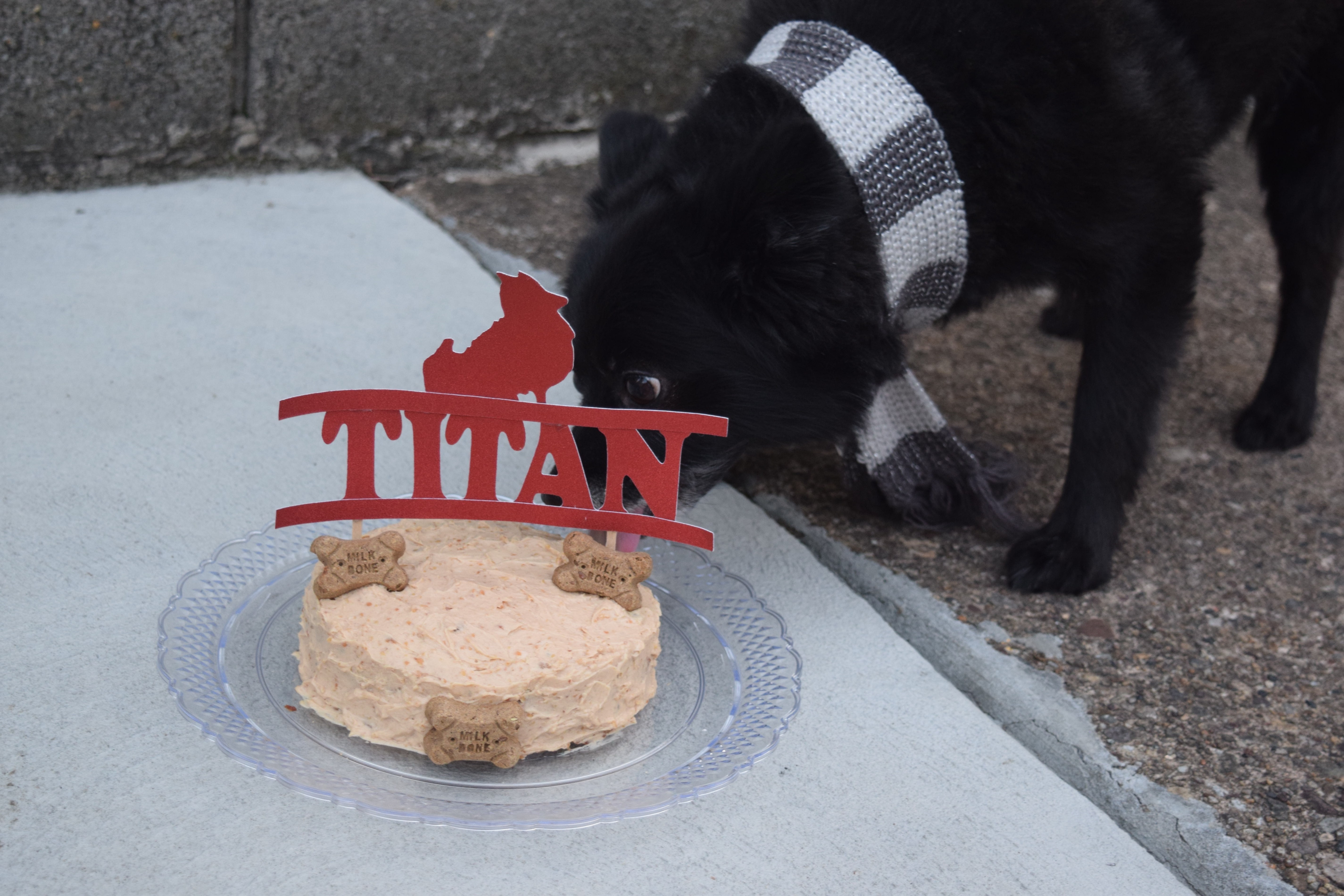 Grain free cake for dogs