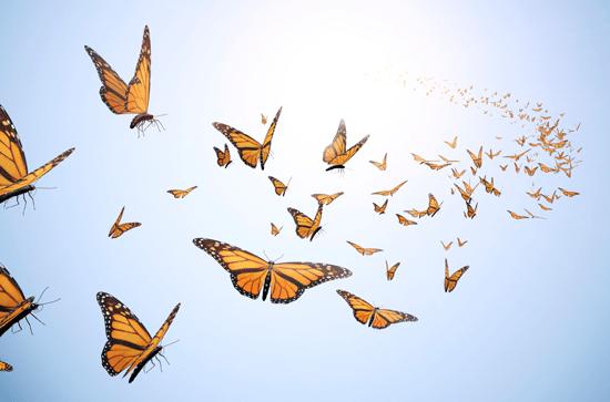 butterfly release memorial 2019