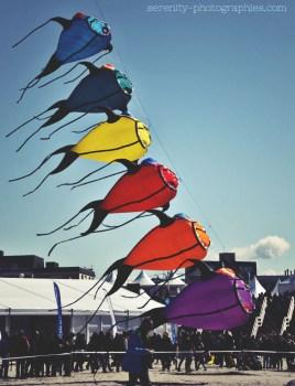 color fish copie