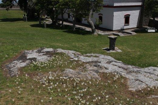 Seres Reales - Fuerte Santa Teresa (10)