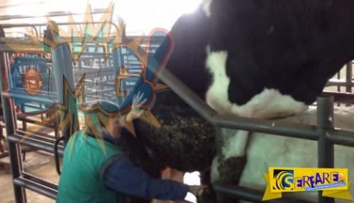 Βίντεο ΣΟΚ – δείτε πως παίρνουν ούρα και σπέρμα ταύρου και φτιάχνουν γνωστά αναψυκτικά!
