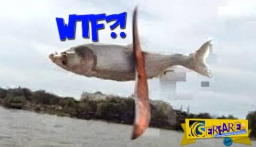 Πολλά έχετε δει… αλλά να «παίζουν» ξύλο με ψάρια;