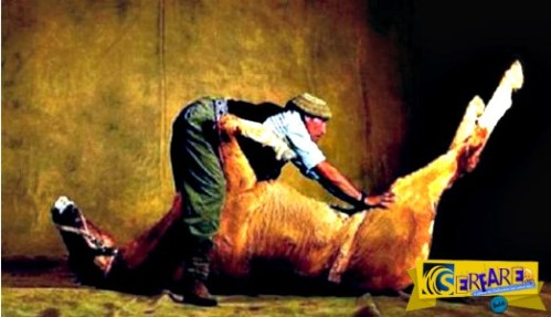 Αγόρασε ένα νεκρό άλογο και κατάφερε να βγάλει πολλά λεφτά από αυτό! Δείτε με ποιον τρόπο!