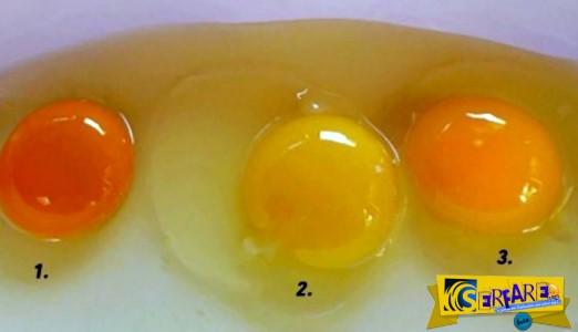 Κρόκος αυγού: Ποιος από αυτούς σας φαίνεται πιο υγιεινός;