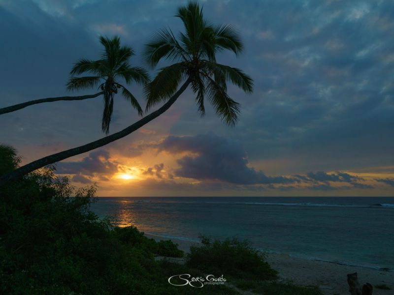 Bello atardecer con palmera en la playa de Eua en Tonga